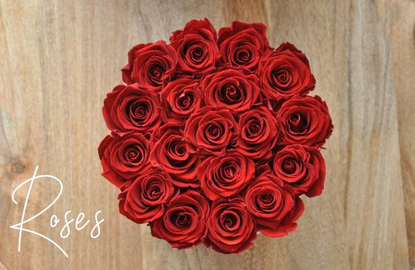 czerwone czerwone roze wieczne gora boxa
