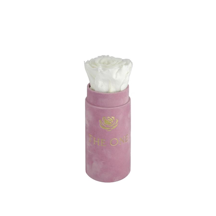 wieczna róża the one biała flower box