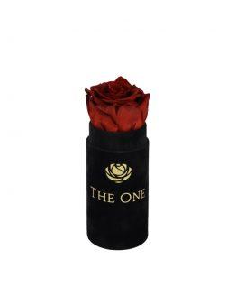czerwona wieczna róża w pudełku