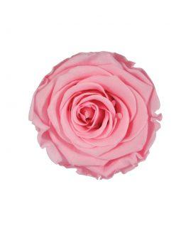 wieczna róża flat lay